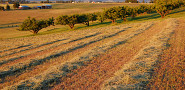 Straw mulch fertilizes crop rows. (Craig Goodwin/sxc.hu)