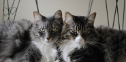 Photo of cats by Iggypcat/sxc.hu.