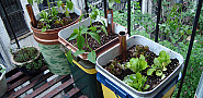 Photo of self watering planters by Mike Lieberman/Urbanorganicgardener.com.