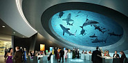 The shark tank above the gala hall at the Patricia and Phillip Frost Museum of Science in Bicentennial Park in Miami [via Architzer.com]