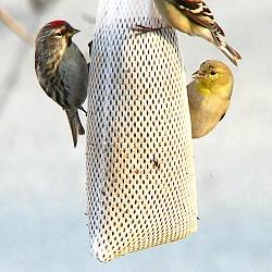 Fun Diy Bird Feeder Ideas Articles