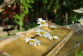 Photo: Jenia M/Flickr