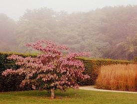 Photo: Emily St Aubert/Flickr