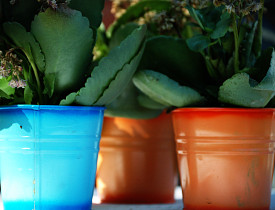 I love these containers! They are such cute little homes for house plants. (Photo: oxxider/sxc.hu)