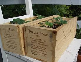 My own wine crate planters. --Adam
