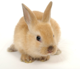 six facts about rabbits   articles