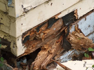 What Is Dry Rot And How Can You Prevent It Articles