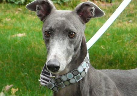 Photo via Greyhound Adoption Services. Click this photo to go to their Facebook page.