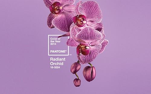 Pantone's Radiant Orchid