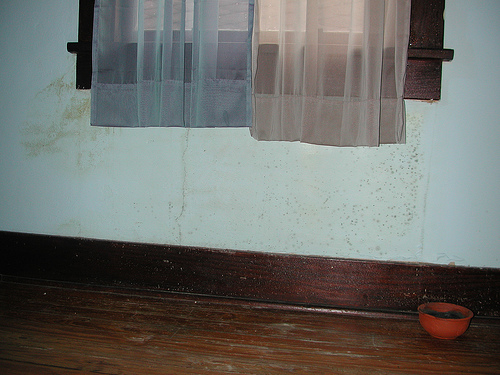 This moldy wall could have been caused by condensation. (Photo: Editor B/Flickr)