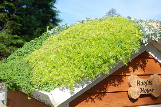 This doghouse at the Main Botanical Gardens has a green roof. Photo: InAweofG-d'sCreations/Flickr.