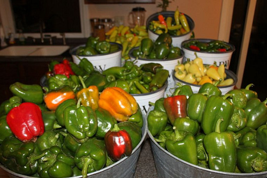 Peppers and photo by Old World Garden Farms via Hometalk.com.